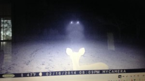 Mysterious lights captured on a trail cam. (Credit: Rainer and Edith Shattles/WLOX)