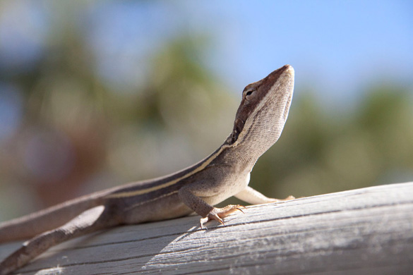 Sunbathing lizard. (Credit: sharkaroo.net/)