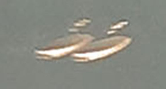 Closeup of the UFOs in the Betts' UFO picture. (Credit: Caters News Agency/Betts Family)