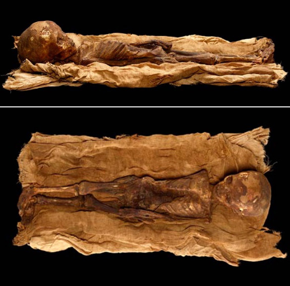 Two more images of the Thebes mummy found in Hunt's article. (Credit:Don Hurlbert, NMNH Department of Anthroplogy.)