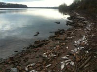 Dead fish along the Arkansas River (credit: 4029TV)