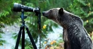 bear-and-camera-ftr