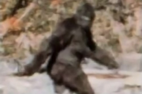 The Bigfoot DNA test results are in