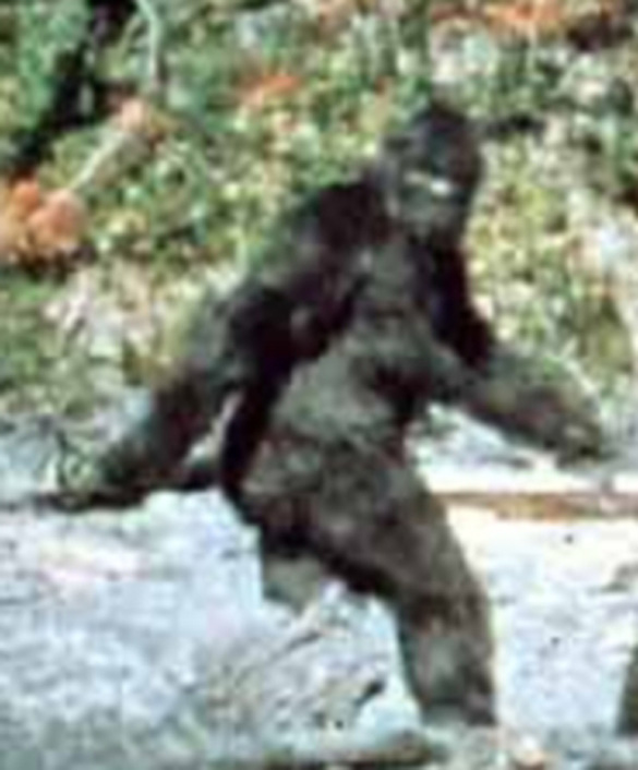 Still image from the Patterson-Gimlin footage of 1967.