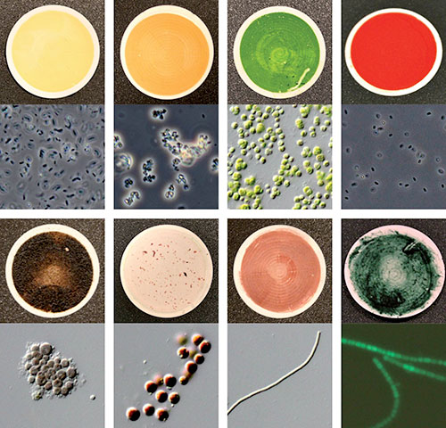Eight of the 137 microorganism samples used to measure biosignatures for the catalog of reflection signatures of Earth life forms. (Credit: Hegde/Max Planck Institute)