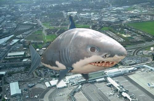 glasgow_shark