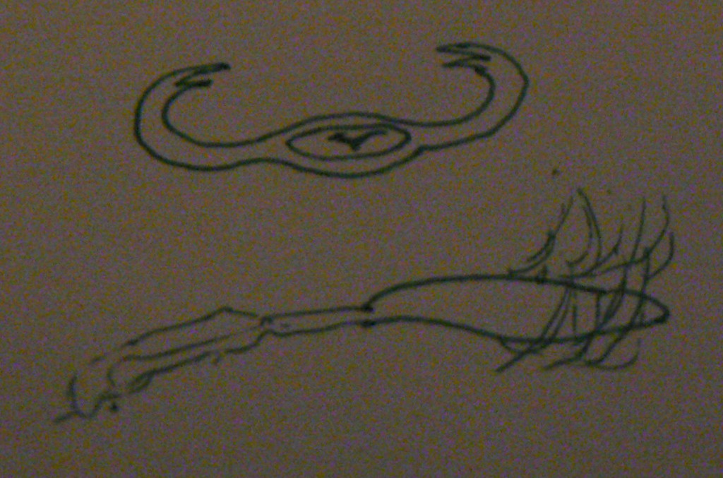 The witness provided this illustration to show how the object looked from two different perspectives – as a boomerang-shaped object, and from the side – as a 'creature.' (Credit: MUFON)