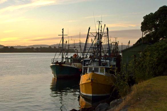Tauranga harbor. (Wikimedia Commons)