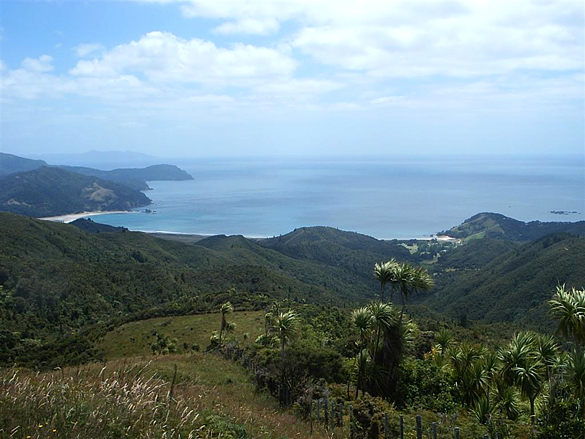 Waikawau Bay on Coromandel Peninsula. (Credit: Wikimedia Commons)