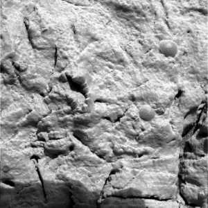 The potentially fossilized crinoid. (Credit: NASA/JPL/Cornell/USGS)
