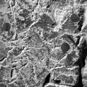 Scientist believes evidence of alien life on Mars was destroyed  Mars_crinoid_2-300x300