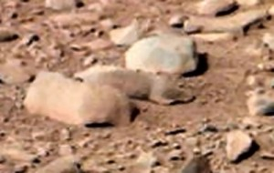 A rat on Mars? (Credit: NASA/JPL-Caltech/MSSS)