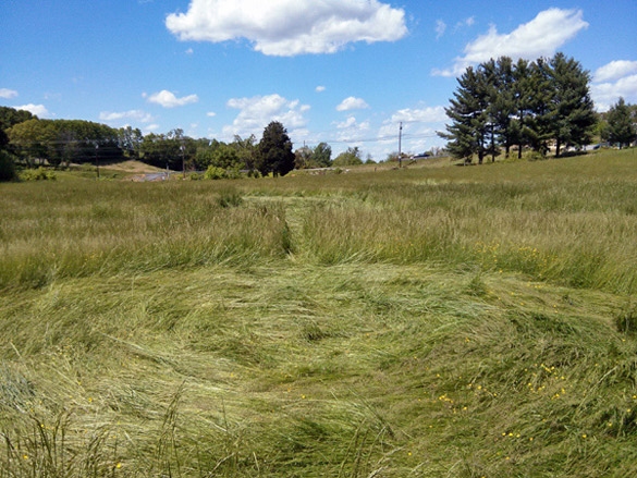 Tennessee crop circle