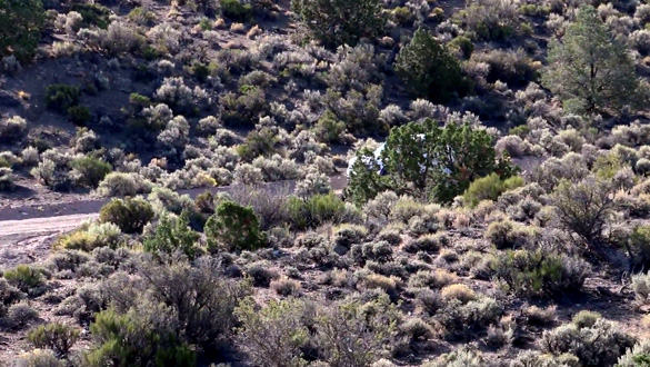 Can you spot the Area 51 Cammo Dudes hiding in this picture? (Credit: Glenn Campbell/YouTube)