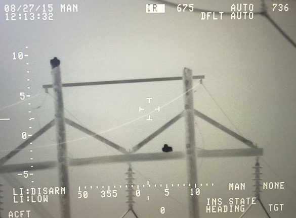 Thermal image of birds using a system similar to one used by the CBP. Image provided by Dave.