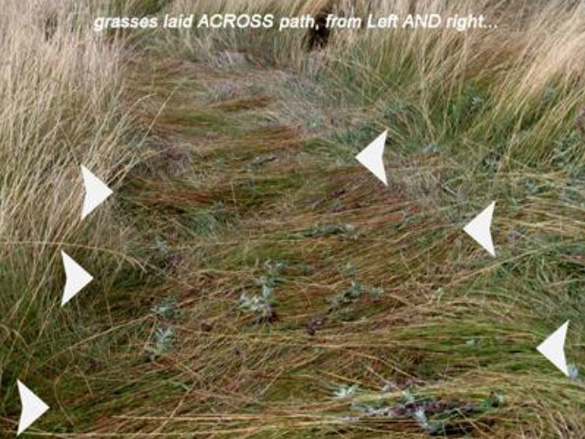 """Close-up shots show plants in """"U"""" tracks at Buffalo Pound Lake are laid across the track and from both sides (arrows)."""