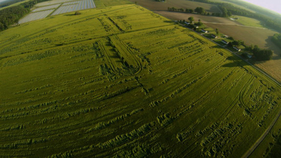Flattened Barley near Dover Air Force Base. (Credit: thesalmonfarm.org)