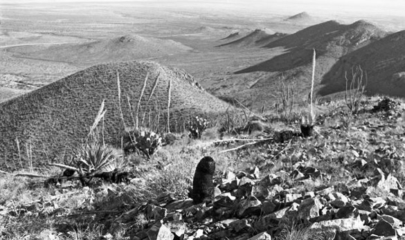 The view from atop Browns Peak in 1968. The scorched earth allegedly caused by the UFOs can be seen in the foreground. (Credit: Arizona Daily Star/Tucson Citizen/Dan Tortorell)