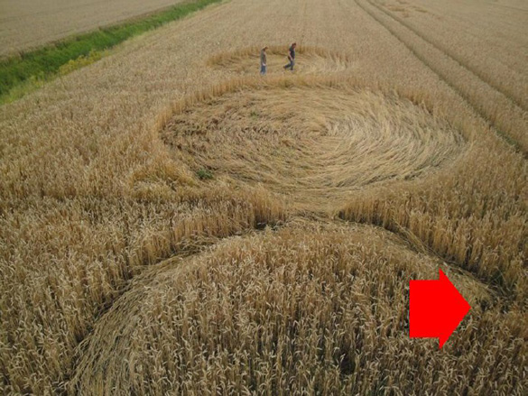 The 2010 Hoeven, Holland crop circle in which the burned seed-heads (red arrow) were found. Photo: Roy Boschman