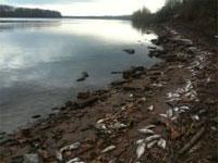 Dead fish along the Arkansas River (credit: 4029TV)