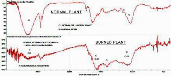 FT-IR graphs showing carbonization of 2010 burned Dutch crop circle plants. Source: Frontier Analysis, Ltd.