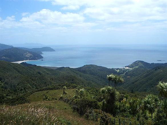 Waikawau Bay on Coromandel Peninsula. (Credit: Wikimedia Commons)