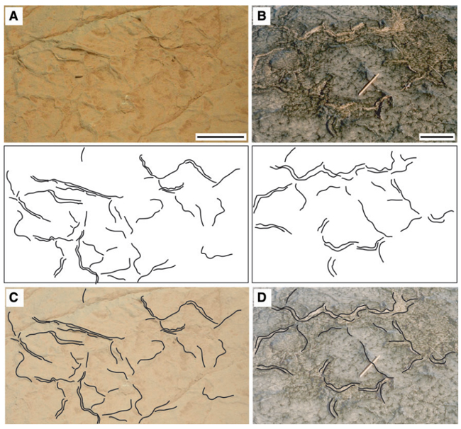 Comparison between structures on Mars and a modern microbial mat on Earth. (Credit: Nora Noffke/Astrobiology)