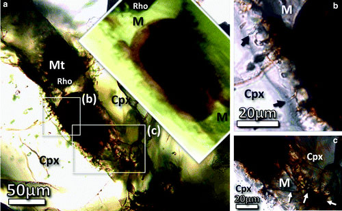 Transmitted light photomicrographs of the odd structure. (Credit: Astrobiology)