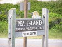 pea_island