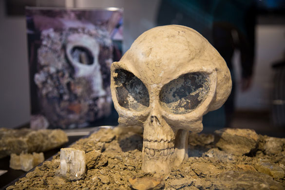 The strange findings tweeted in 2013 can be seen in the background of this mysterious skull. Scary. (Credit: FlyDenver.com)